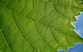 Wallpaper green, blue, leaf, plant