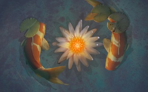 Picture pond, Lotus, koi, by xLocky