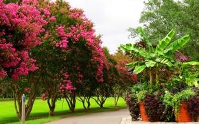 Picture trees, Park, Spring, flowering, trees, park, flowers, spring, flowering