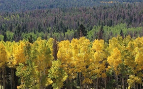 Picture autumn, forest, trees, slope