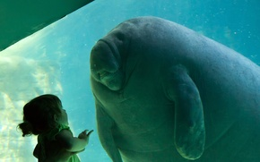 Picture girl, manatee, Trichechus, contact, Homo sapiens