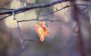 Picture sheet, branch, bokeh