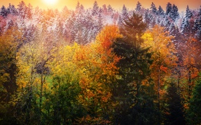Picture autumn, leaves, snow, trees, treatment, Winter is coming