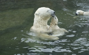Picture water, tenderness, bears