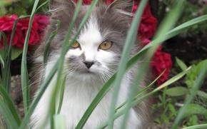 Picture cat, grass, cat, grey, cat