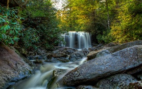 Picture forest, trees, stream, stones, waterfall, USA, Blackwater Falls State park, Elakala Falls