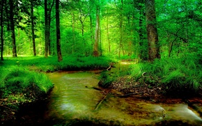 Picture greens, forest, summer, stream