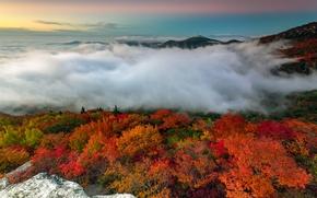 Wallpaper USA, forest, autumn, North Carolina, trees, fog, mountains, morning, stones
