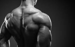 Wallpaper bodybuilder, muscle mass, back muscles