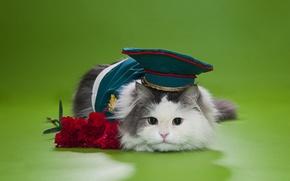 Picture cat, flowers, fluffy, cap, clove