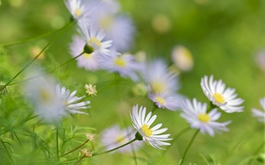 Picture field, macro, petals, garden, Daisy, meadow