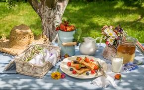 Picture summer, berries, Breakfast, honey, honey, fresh, lawn, toast, berries, breakfast, milk, toast