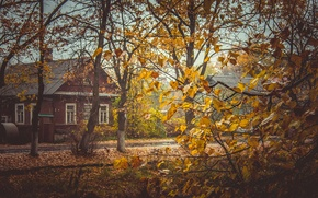 Picture autumn, leaves, trees, yellow, house, yellow, village, Russia, village