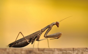 Picture macro, beetle, Mantis