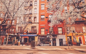 Picture trees, building, New York, apartments, stores, United States