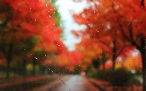 Picture road, autumn, glass, drops, trees, rain, blur