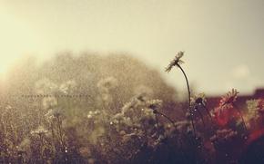 Picture summer, drops, flowers, rain