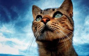Picture the sky, eyes, dream, cat, mustache, look
