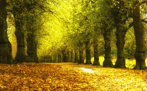 Picture autumn, leaves, trees, Park, yellow, alley