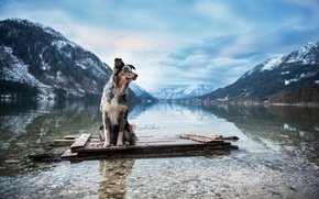 Picture mountains, river, dog