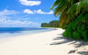 Picture sand, sea, beach, tropics, palm trees, the bushes