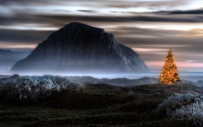 Picture landscape, holiday, tree