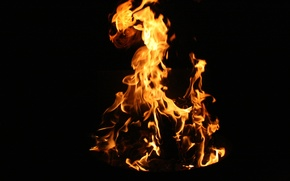 Picture macro, night, nature, background, fire, flame, Wallpaper, the fire, flames