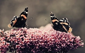 Picture flower, butterfly, plant, beauty