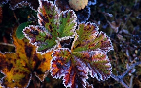 Wallpaper frost, leaf, autumn
