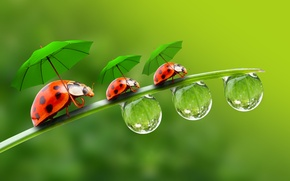Picture droplets, umbrellas, ladybugs, a blade of grass, droplets, ladybirds, a blade of grass, parasols