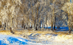 Picture winter, the sun, snow, trees, Winter, Snow, Trees