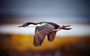Picture WINGS, FLIGHT, BIRD, PROFILE, FEATHERS, BEAK, TAIL, STROKE