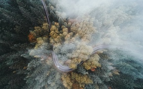 Picture machine, forest, nature, fog, trees.road, look over
