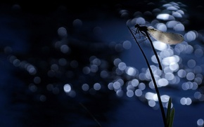 Picture night, wings, dragonfly, silhouette, insect, a blade of grass, bokeh, Wallpaper from lolita777