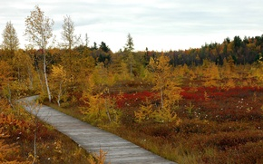 Picture autumn, the sky, clouds, trees, swamp, track, gat