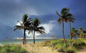 Picture sea, trees, landscape