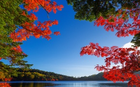 Picture autumn, the sky, leaves, trees, lake, the crimson