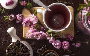 Picture tea, Sakura, Cup
