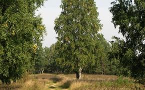 Wallpaper trees, grass, Road