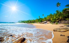 Picture beach, Islands, palm trees, the ocean, Caribbean, Caribbean
