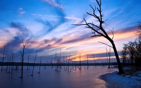 Wallpaper Trees, the evening, lake, ice, winter