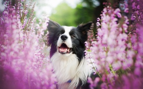 Wallpaper flowers, dog, bokeh
