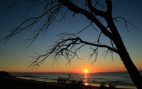 Picture sea, the sky, the sun, sunset, tree, silhouette