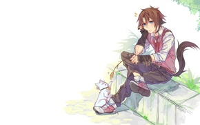 Picture anime, art, kittens, guy, neko