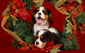 Picture language, dogs, decoration, red, holiday, new year, Christmas, puppies, mouth, pair, puppy, gold plated, tinsel, …