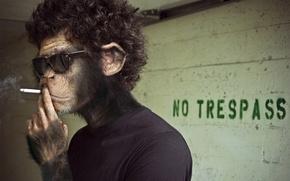 Picture smoke, monkey, cigarette