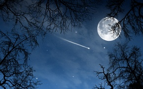 Wallpaper view stars, stars, nature, trees, the moon, moon, luna, night, trees, night, a month, sky, ...