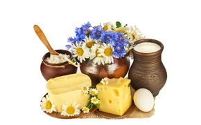 Picture flowers, egg, oil, chamomile, bouquet, cheese, milk, saucers, cheese, Mat, pot, appetizing, pitchers