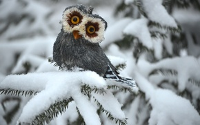 Picture winter, owl, spruce, white