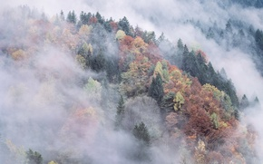 Picture autumn, forest, mountains, fog
